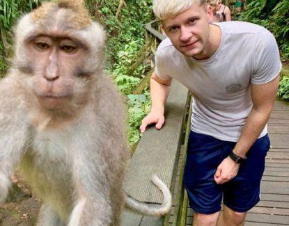 Monkey Selfie Bali