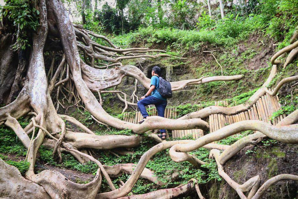 Munduk Asri Ubud 2 1024x683 » Munduk Asri Ubud, Wisata Hutan Rimba yang Instagramable di Desa Kerta Payangan