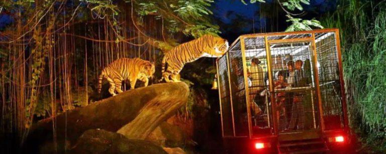 Night at Zoo Gianyar