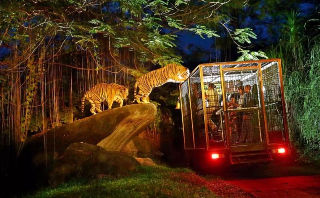 Night at Zoo Gianyar