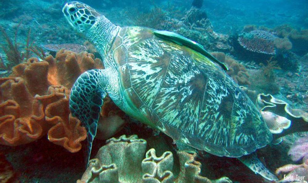 Pantai Blue Lagoon 1 » Pantai Blue Lagoon, Bisa Betah Snorkeling Seharian di Pantai Padang Bai Ini