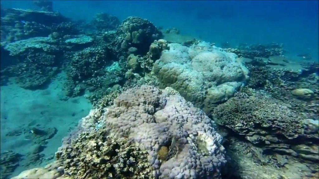 Pantai Lipah 2 1024x576 » Pantai Lipah, Pantai Sepi yang Punya Keindahan Alam Bawah Laut Memukau di Karangasem