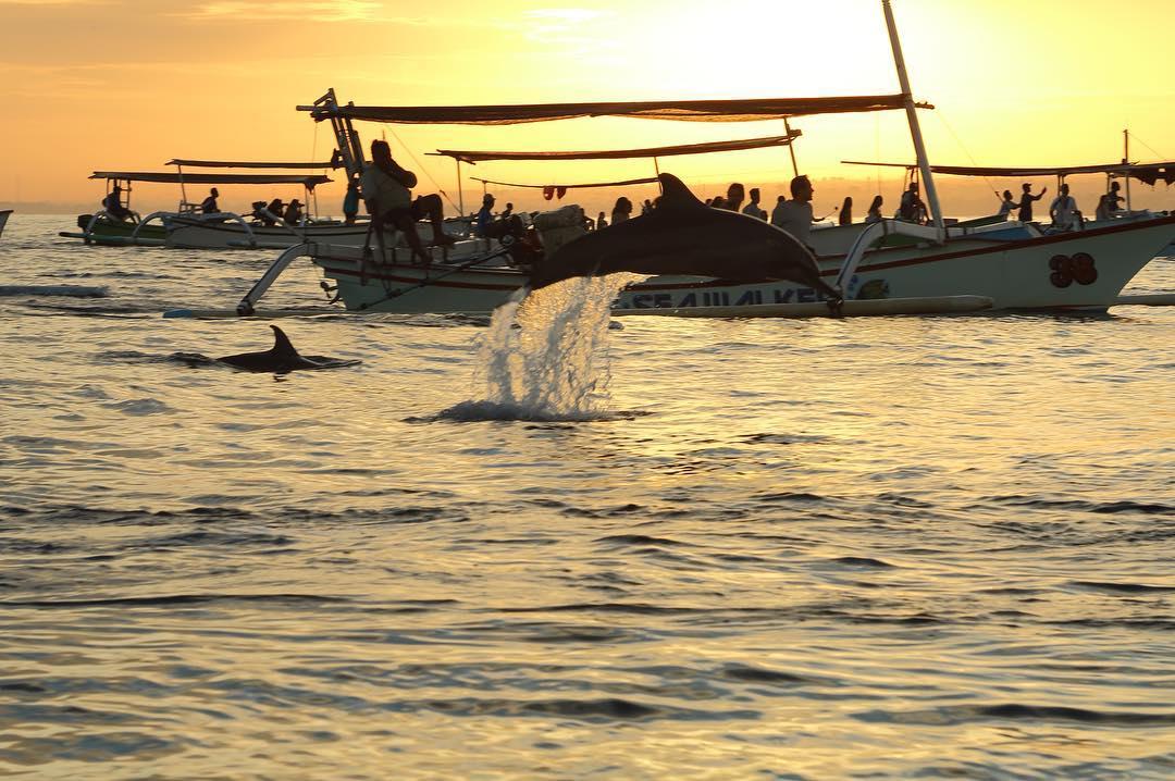 'Berburu' Lumba-Lumba Liar di Pantai Lovina Bali