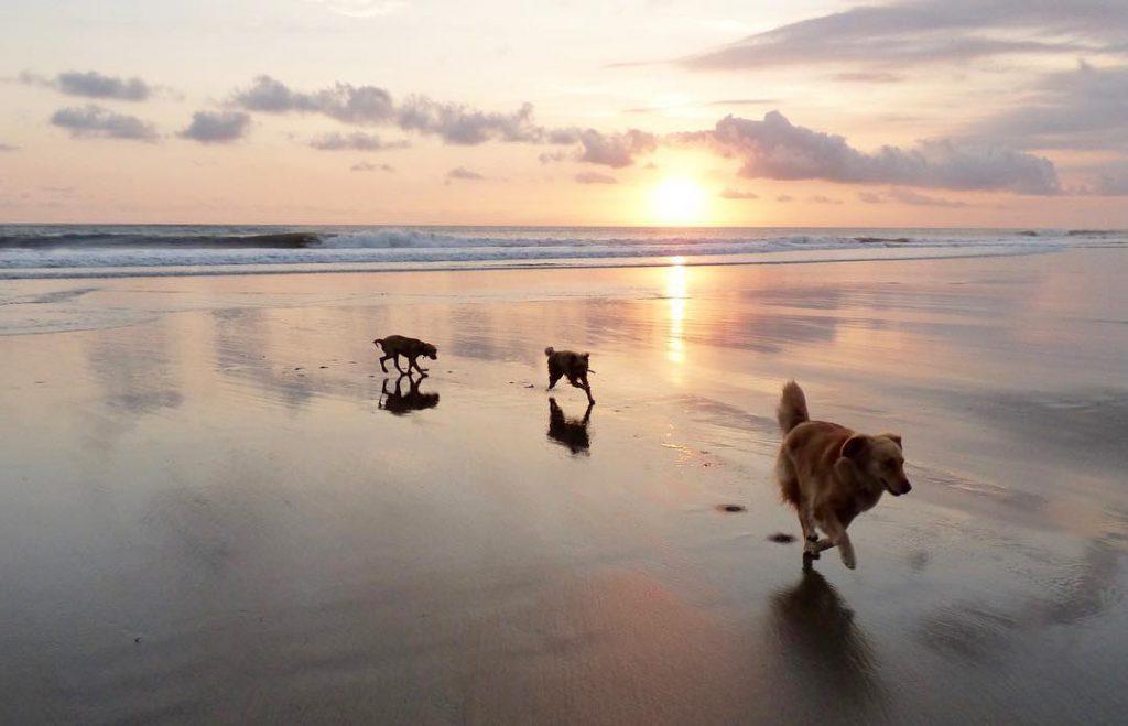 Pantai Petitenget 1 1024x659 » Pantai Petitenget, Pemandangan Eksotis Pura Tepi Pantai di Seminyak