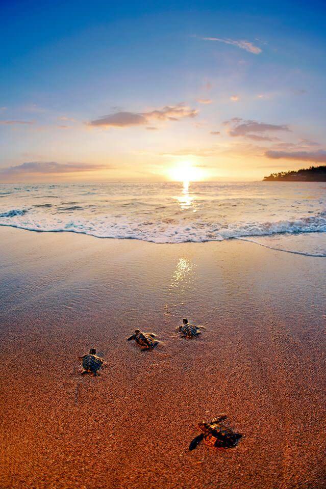 Pantai Senggigi Lombok 3 » Wisata Pantai Senggigi Lombok yang Selalu Terasa Istimewa