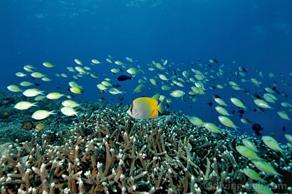 Pantai Tulamben 2 » Pantai Tulamben, Pemandangan Underwater dengan Bangkai Kapal Amerika