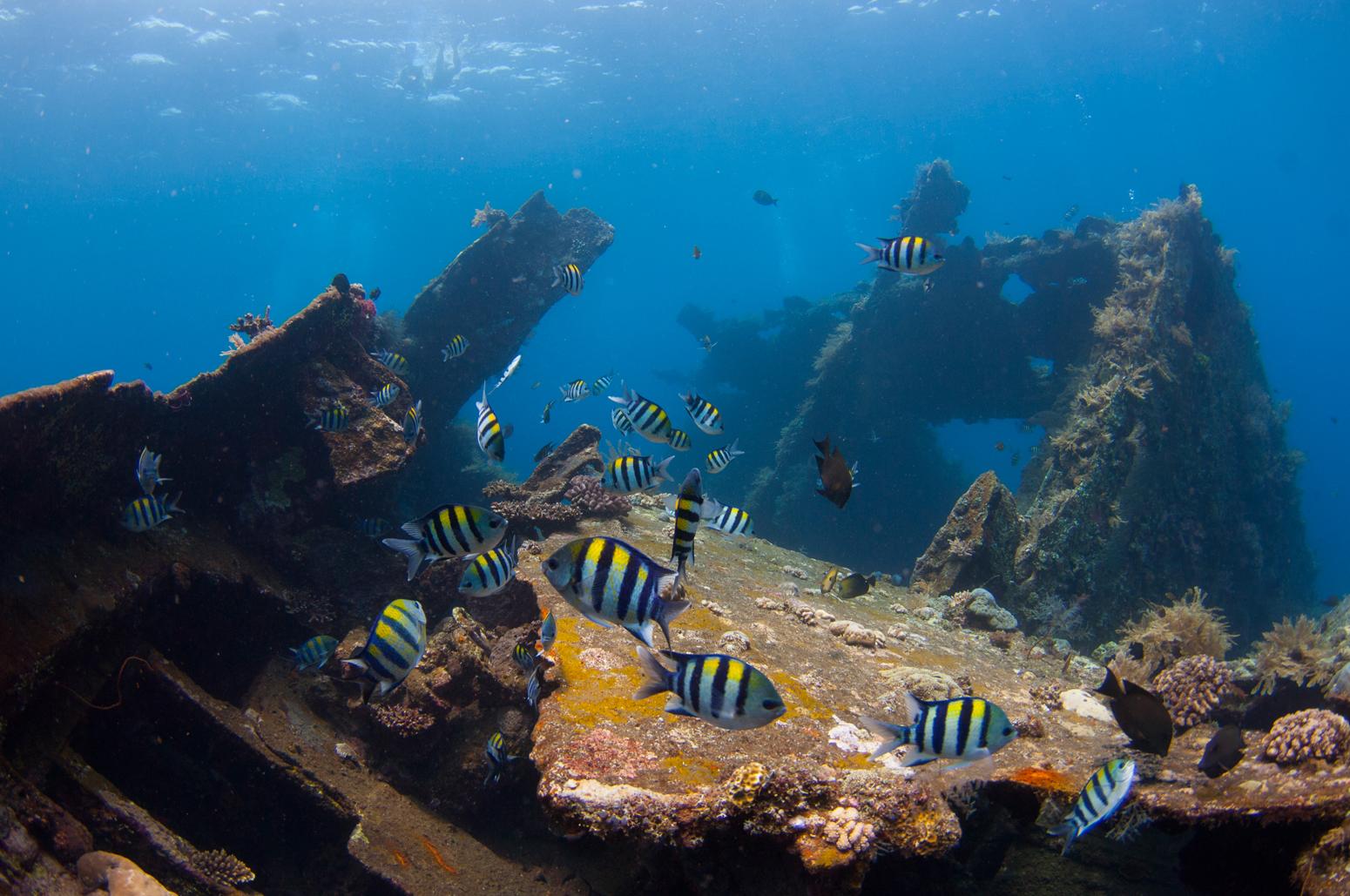 Pantai Tulamben, Pemandangan Underwater dengan Bangkai Kapal Amerika