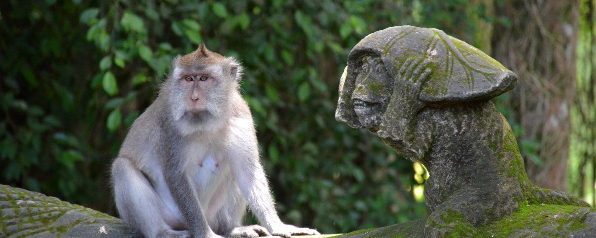 Patung monyet di Monkey Forest Ubud