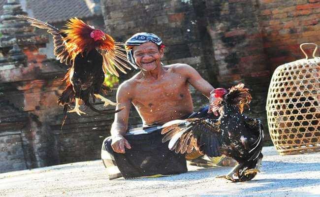 Pengayam Ayaman