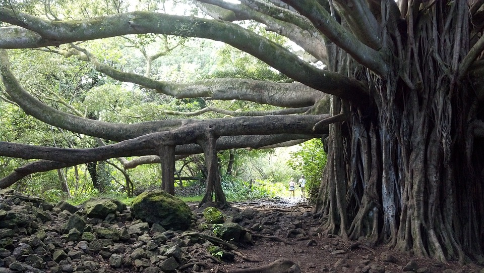 Pohon Keramat dan Mistis di Bali 1 - 4 Jenis Pohon Keramat di Bali yang Dipercaya Sarang Makhluk Halus