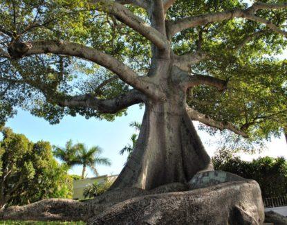 Pohon Keramat dan Mistis di Bali