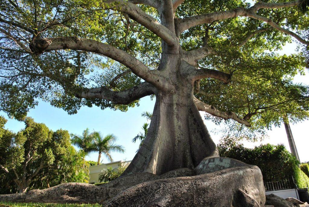 4 Jenis Pohon Keramat dan Mistis di Bali yang Dipercaya Sebagai Rumah Makhluk   Halus
