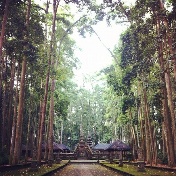 Pura Bukit Sari Bali, Pura Tengah Hutan dengan Ratusan Monyet Menghiasinya