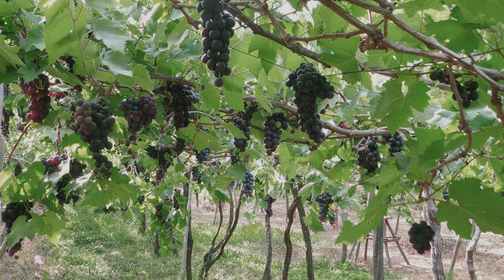 Sababay Winery Bali 2 1024x568 » Sababay Winery Bali, Kilang Anggur Berkualitas Internasional Milik Indonesia