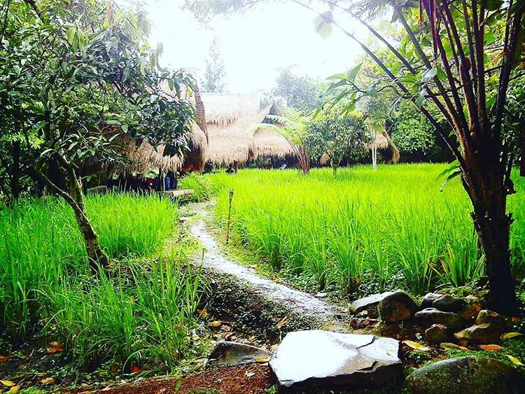 Sapulidi Resort Ubud 1 » Sapulidi Resort Ubud, Pilihan Penginapan Bernuansa Alami di Bali
