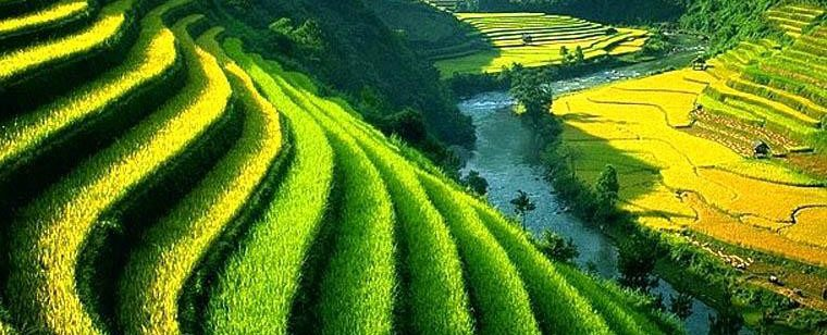 Mengenal Sistem Irigasi Tradisional Subak di Bali yang Menjadi ...