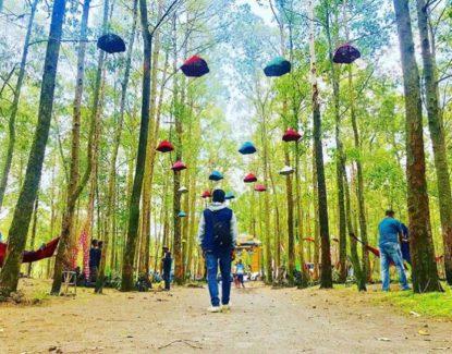 Taman Wisata Ampupu Kembar Kintamani