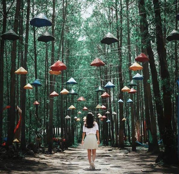 Taman Wisata Ampupu Kembar Kintamani 4 » Taman Wisata Ampupu Kembar Kintamani, Hutan Kumuh yang Kini Menjadi Destinasi Instagenic