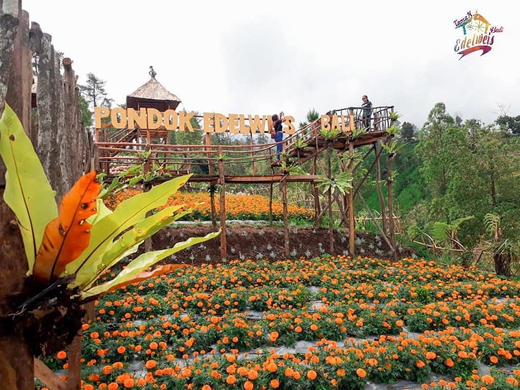 Taman Wisata Edelweiss Karangasem 2 » Taman Wisata Edelweiss Karangasem, Destinasi Kekinian yang Instagramable Abis