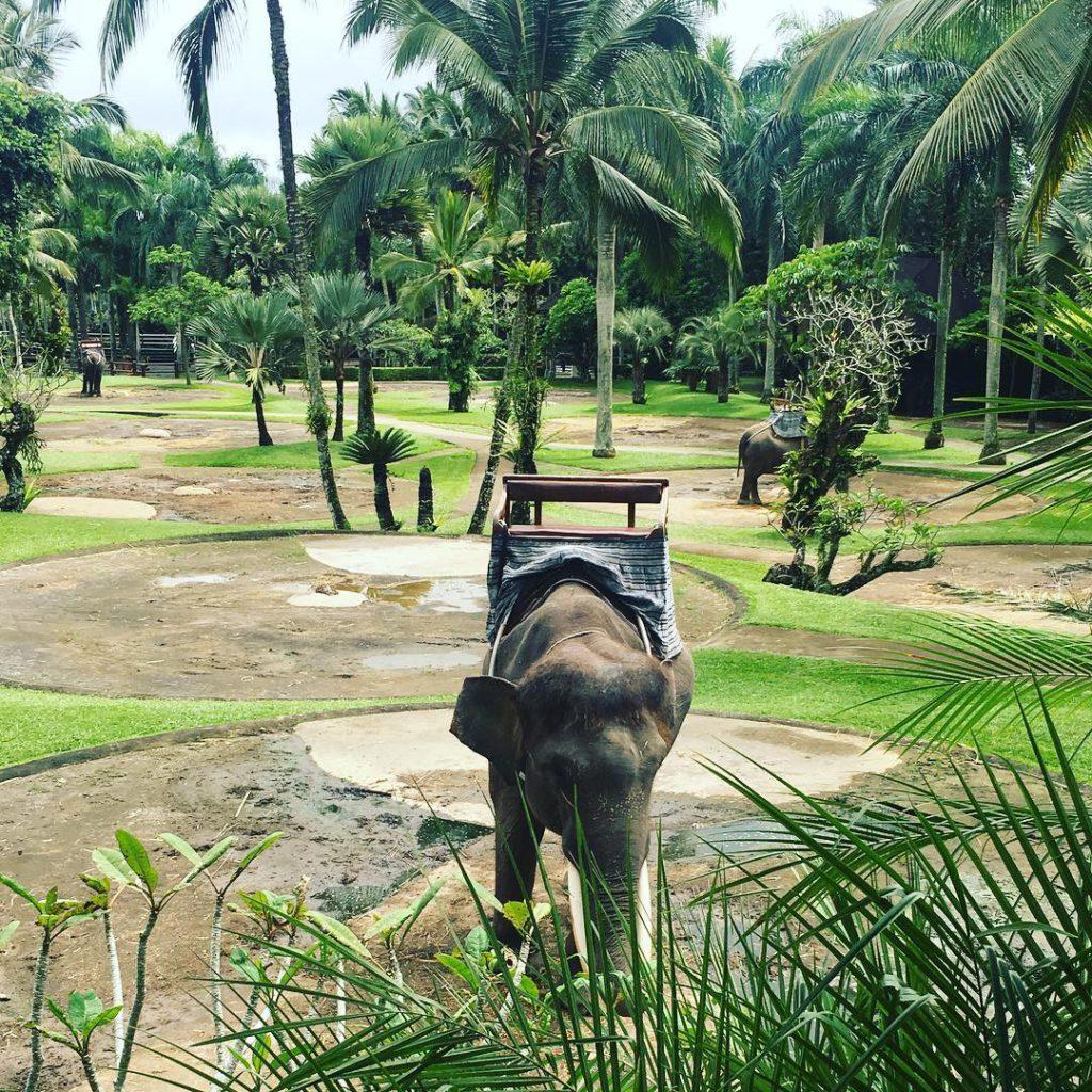 Taro Elephant Safari Park Ubud 1 1024x1024 » Serunya Pengalaman Naik Gajah di Taro Elephant Safari Park Ubud
