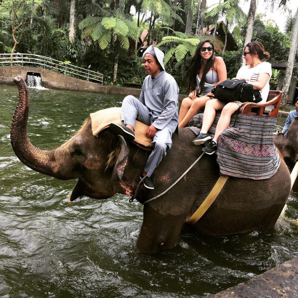 Taro Elephant Safari Park Ubud 3 1024x1024 » Serunya Pengalaman Naik Gajah di Taro Elephant Safari Park Ubud