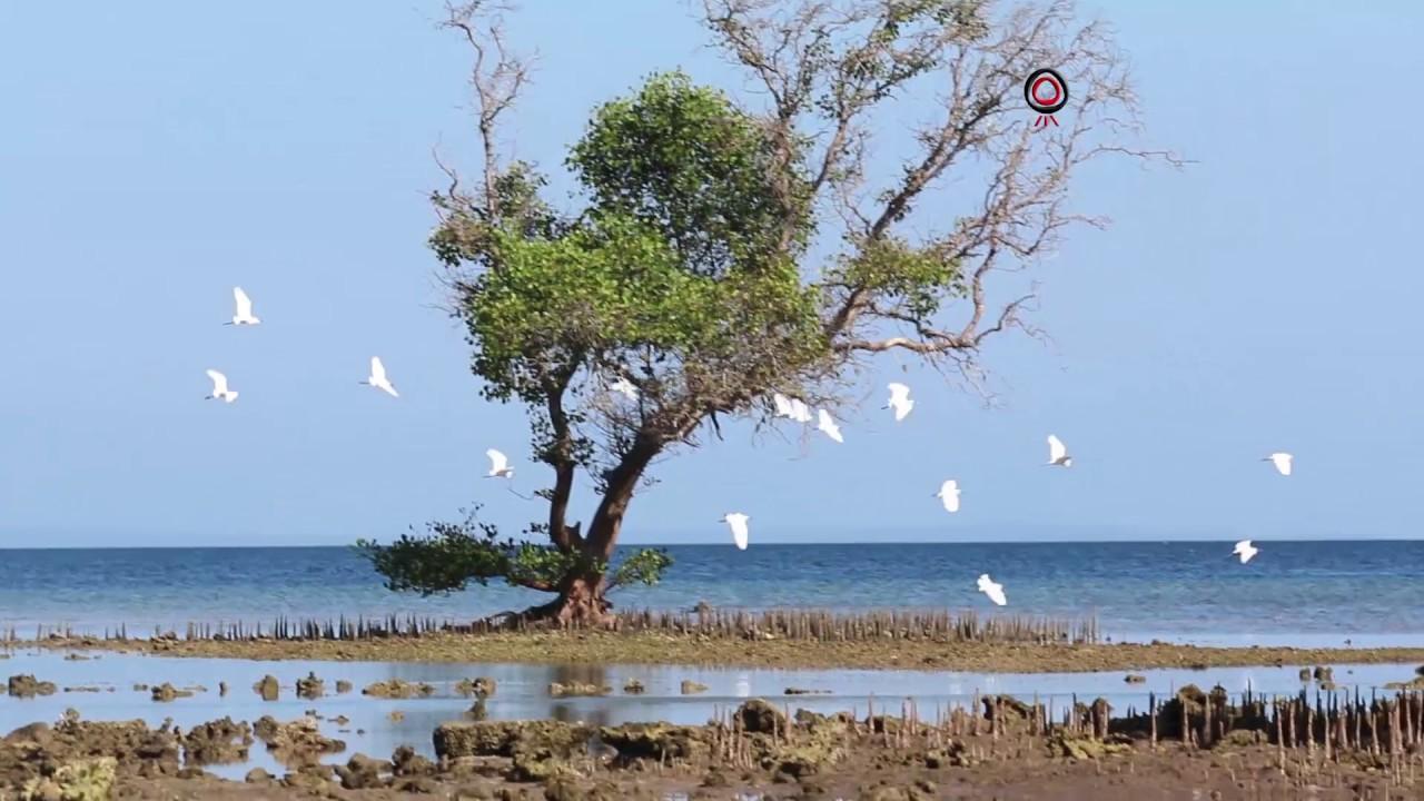 Teluk Banyuwedang Buleleng