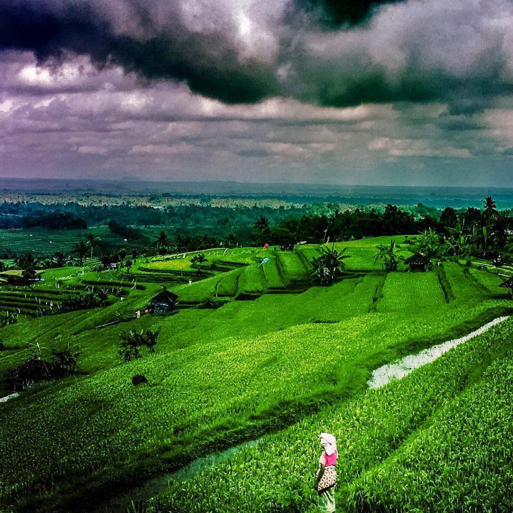 Terasering Jatiluwih Tabanan 3 1024x1024 » Terasering Jatiluwih Tabanan, Wisata Alami yang Menyejukkan Mata
