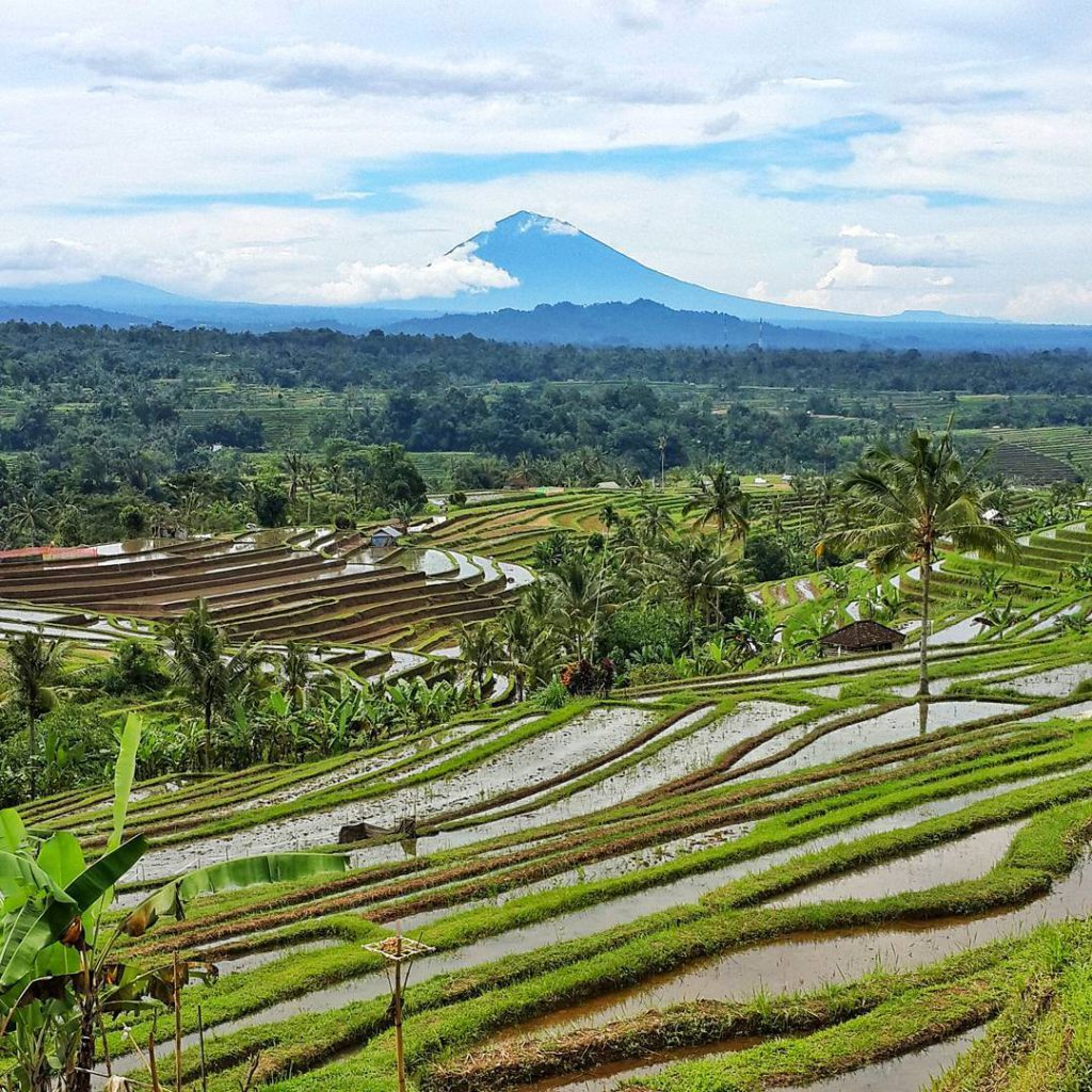 Terasering Jatiluwih Tabanan 4 1024x1024 » Terasering Jatiluwih Tabanan, Wisata Alami yang Menyejukkan Mata