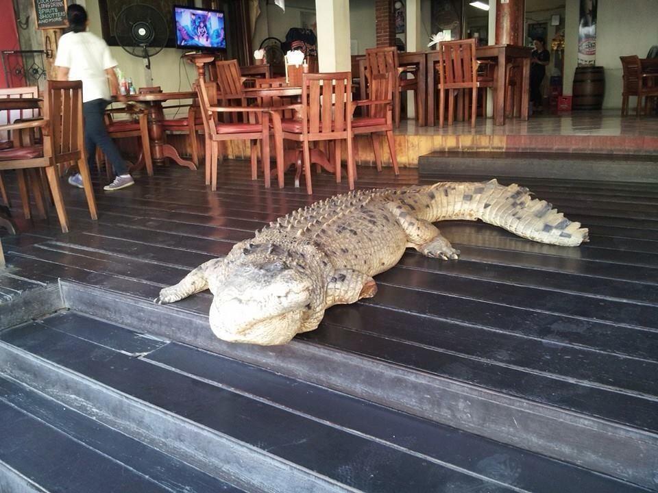 The Bush Telegraph Pub Seminyak, Kuliner dengan Suasana Unik dan Instagramable di Bali, Ada Buaya Lho!