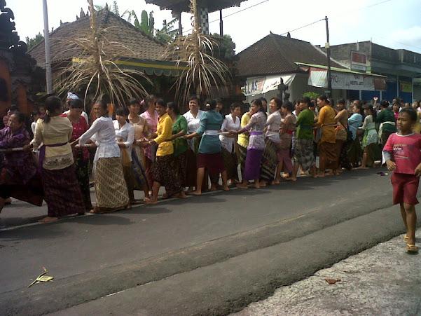 Uniknya Tradisi Makepung Lomba Naik Kerbau di Jembrana 1 » Tradisi Mbed-mbedan Desa Semate, Tradisi Tarik Tambang Unik di Bali