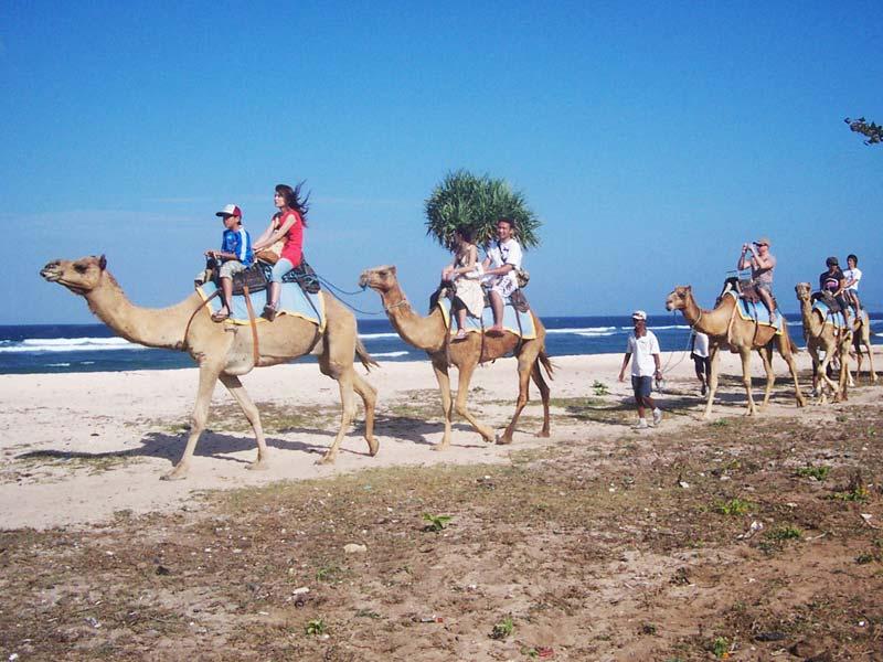 Unta di Pantai Nusa Dua Bali