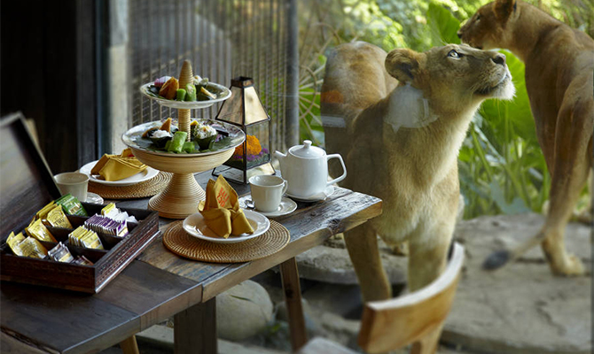Wana Restaurant Bali Zoo, Sensasi Kuliner Menantang dengan Ditemani Singa Raja Hutan