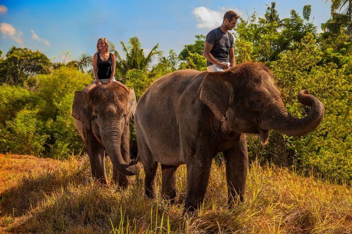 Wisata Naik Gajah di Bali 2 » Ingin Mencoba Pengalaman Wisata Naik Gajah di Bali? Ini Pilihannya!