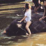 Wisata Naik Gajah di Bali