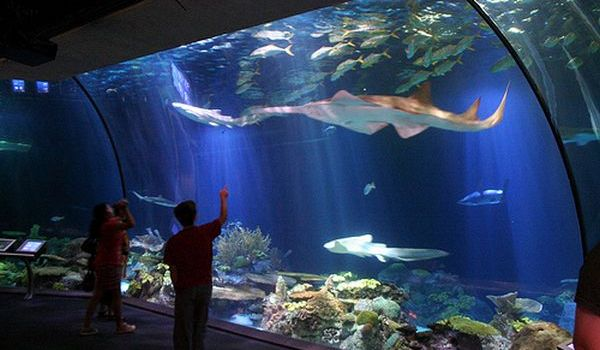 Wisata Seaworld Bali 2 » Wisata Seaworld Bali, Pilihan Liburan Edukatif Bersama Anak