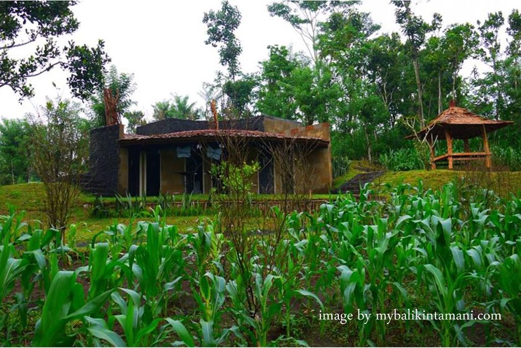 Baliwoso Camp: Pilihan Unik untuk Tinggal Selama Menghabiskan Waktu di Kintamani
