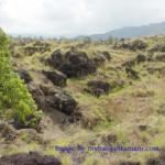 destinasi wisata kintamani gunung batur 150x150 » Tips Wisata: Nikmatnya Makan Siang di Wilayah Kintamani