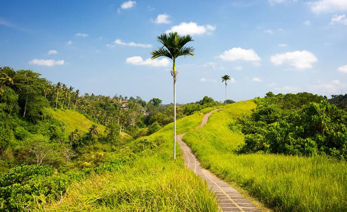 hotel murah dekat campuhan ridge walk 1 » 5 Rekomendasi Hotel Murah di Dekat Campuhan Ridge Walk Ubud
