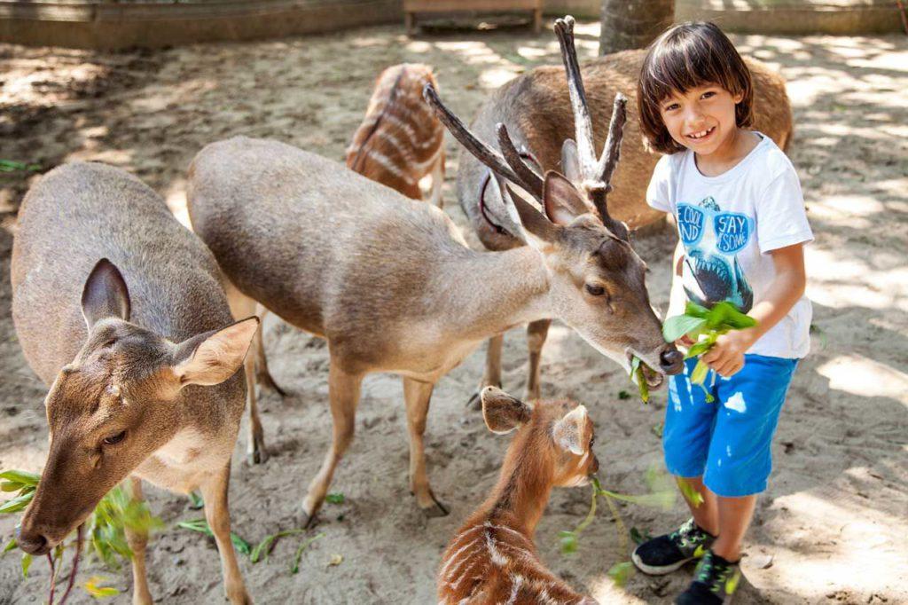 kebun binatang di Bali 1 1024x682 » 5 Pilihan Kebun Binatang di Bali untuk Sarana Liburan Edukatif Bersama Anak