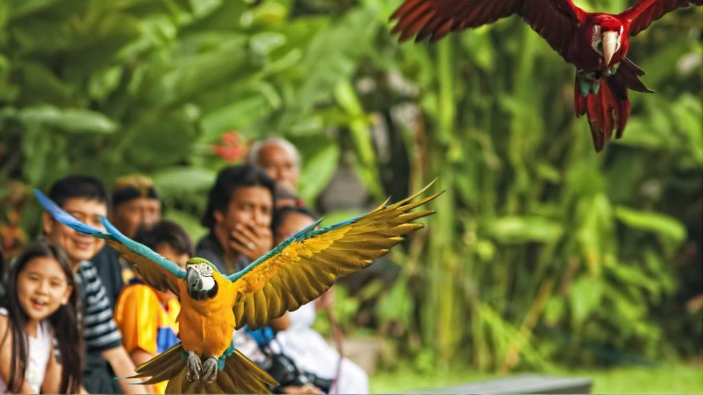 kebun binatang di Bali 2 1024x576 » 5 Pilihan Kebun Binatang di Bali untuk Sarana Liburan Edukatif Bersama Anak