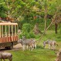 kebun binatang di Bali