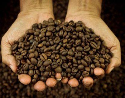 kopi kintamani khas Bali
