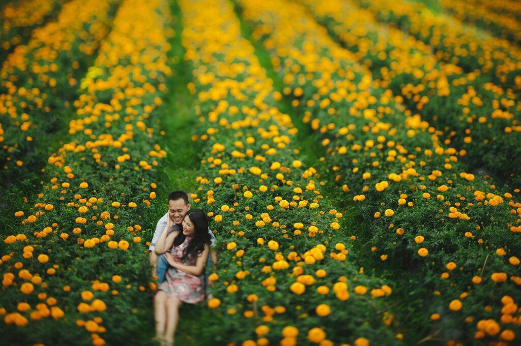 Liburan Romantis dan Seru di Ladang Bunga Marigold Bali