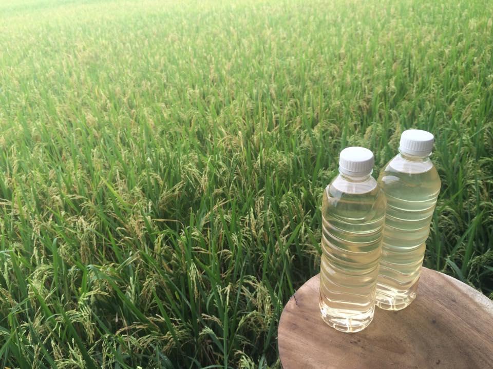 Lengis Tandusan, Minyak Kelapa Tradisional Penuh Manfaat dari Bali