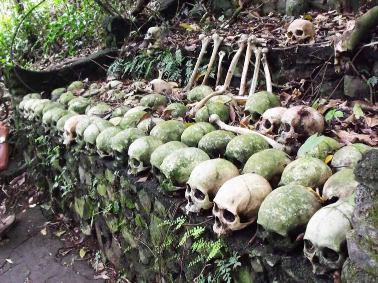 pohon taru menyan 1 » Melihat Keunikan Pohon Taru Menyan, Pohon Ajaib dari Bali