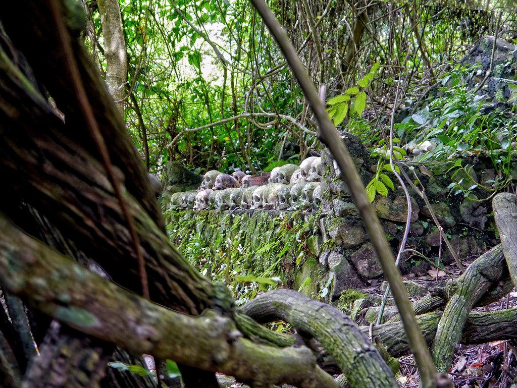 pohon taru menyan 2 1024x769 » Melihat Keunikan Pohon Taru Menyan, Pohon Ajaib dari Bali