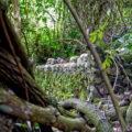Pohon taru menyan