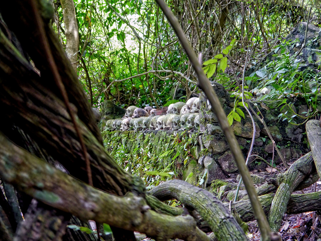 Melihat Keunikan Pohon Taru Menyan, Pohon Ajaib dari Bali