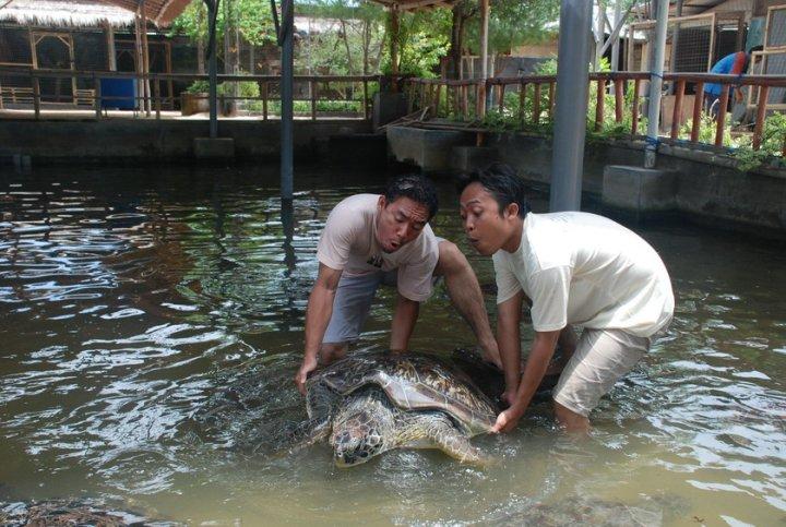 pulau serangan denpasar 3 » Pulau Serangan Denpasar, Wisata Berkunjung ke Penangkaran Penyu Hijau