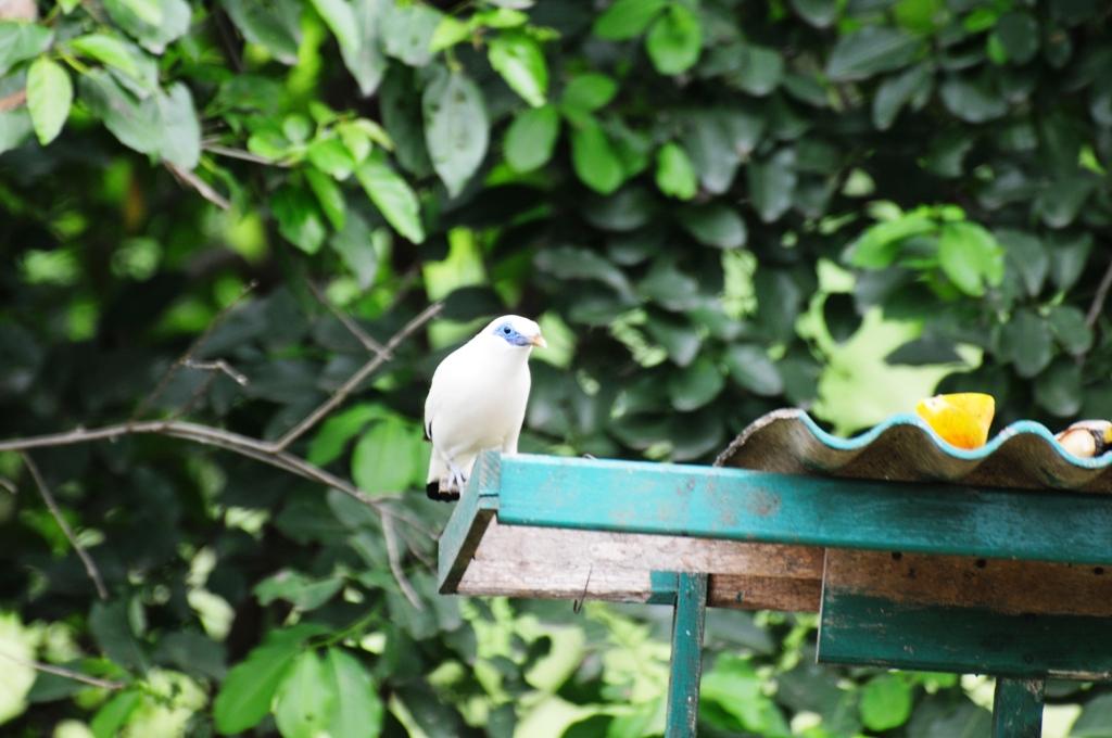 Taman Nasional Bali Barat, Lebih Dekat dengan Burung Jalak Bali di Sini
